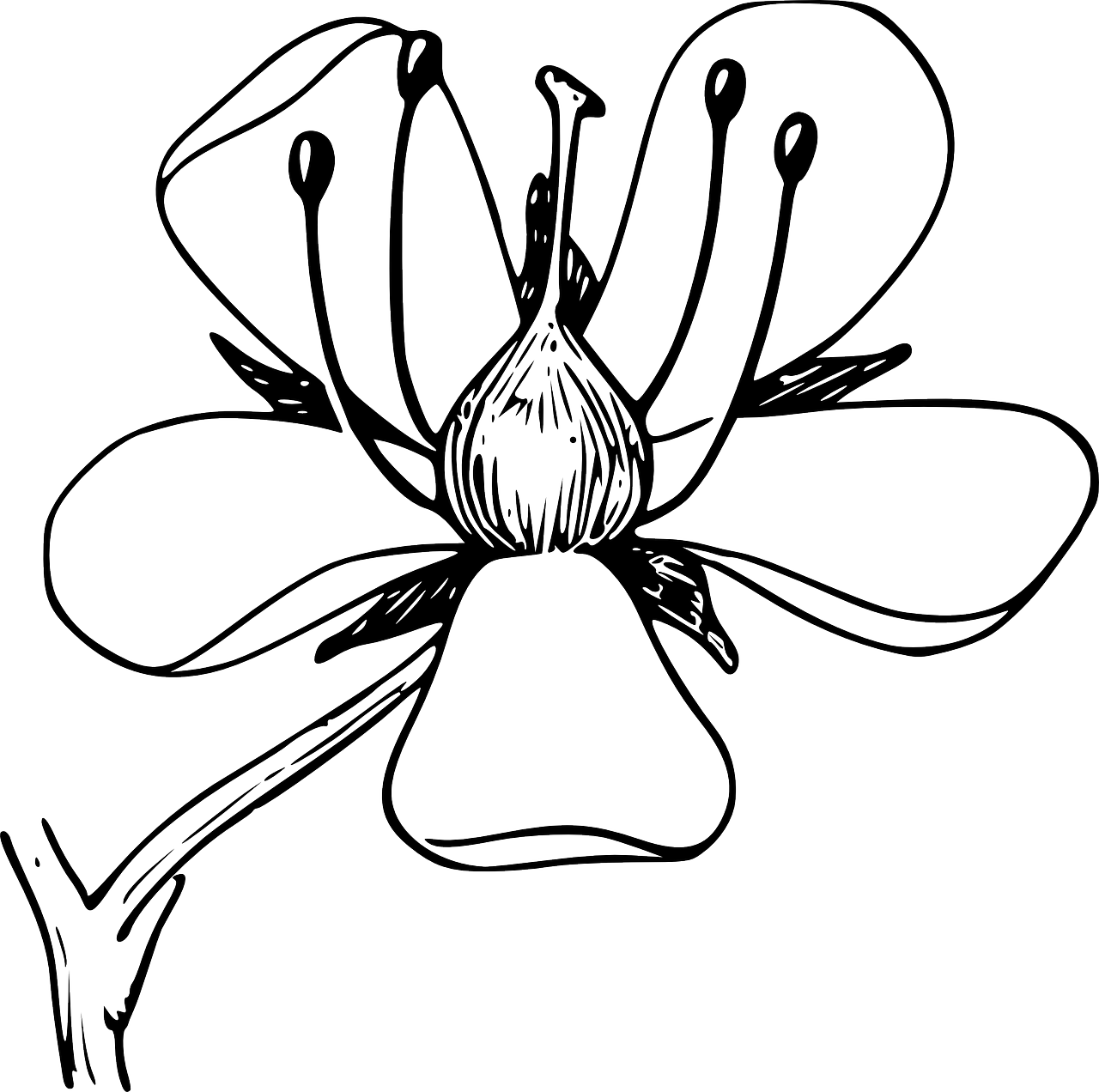 flower doodle coloring pages daisy flower drawing coloring page download print coloring doodle pages flower