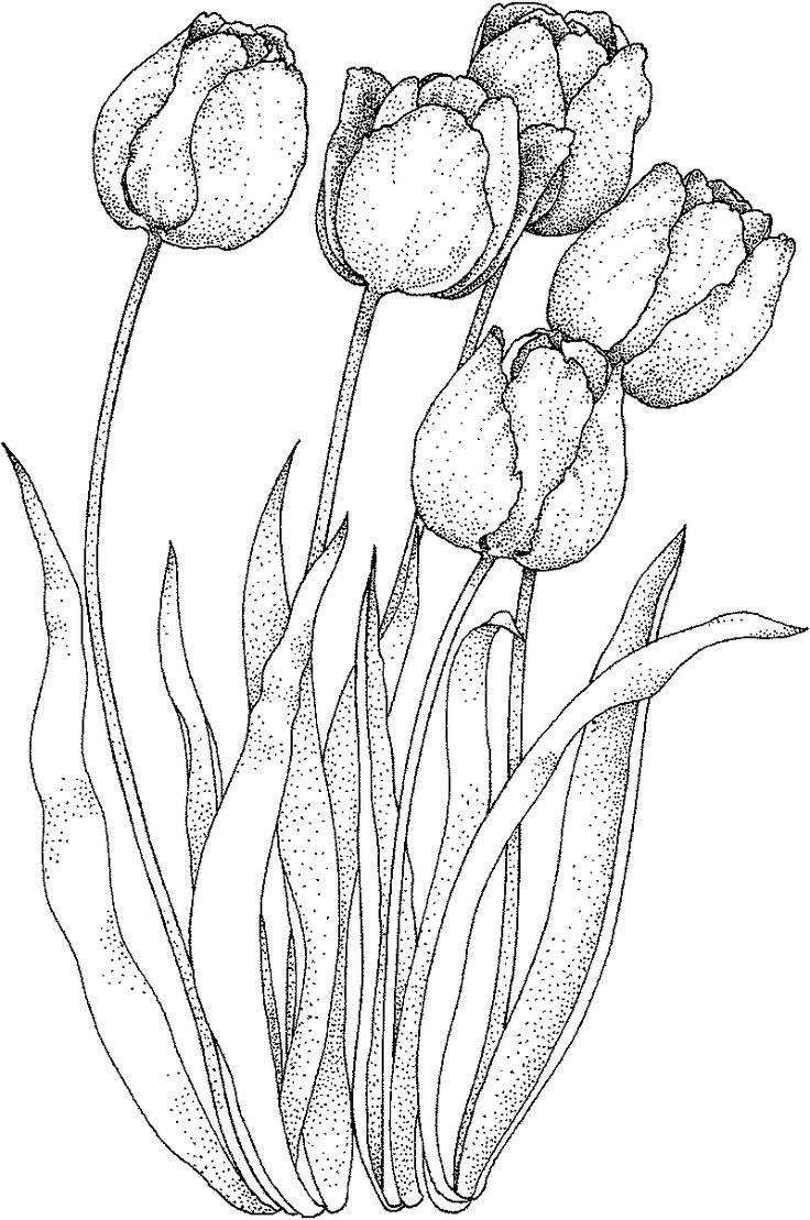 flower doodle coloring pages realistic tulip coloring sheet flower drawing flower doodle flower pages coloring