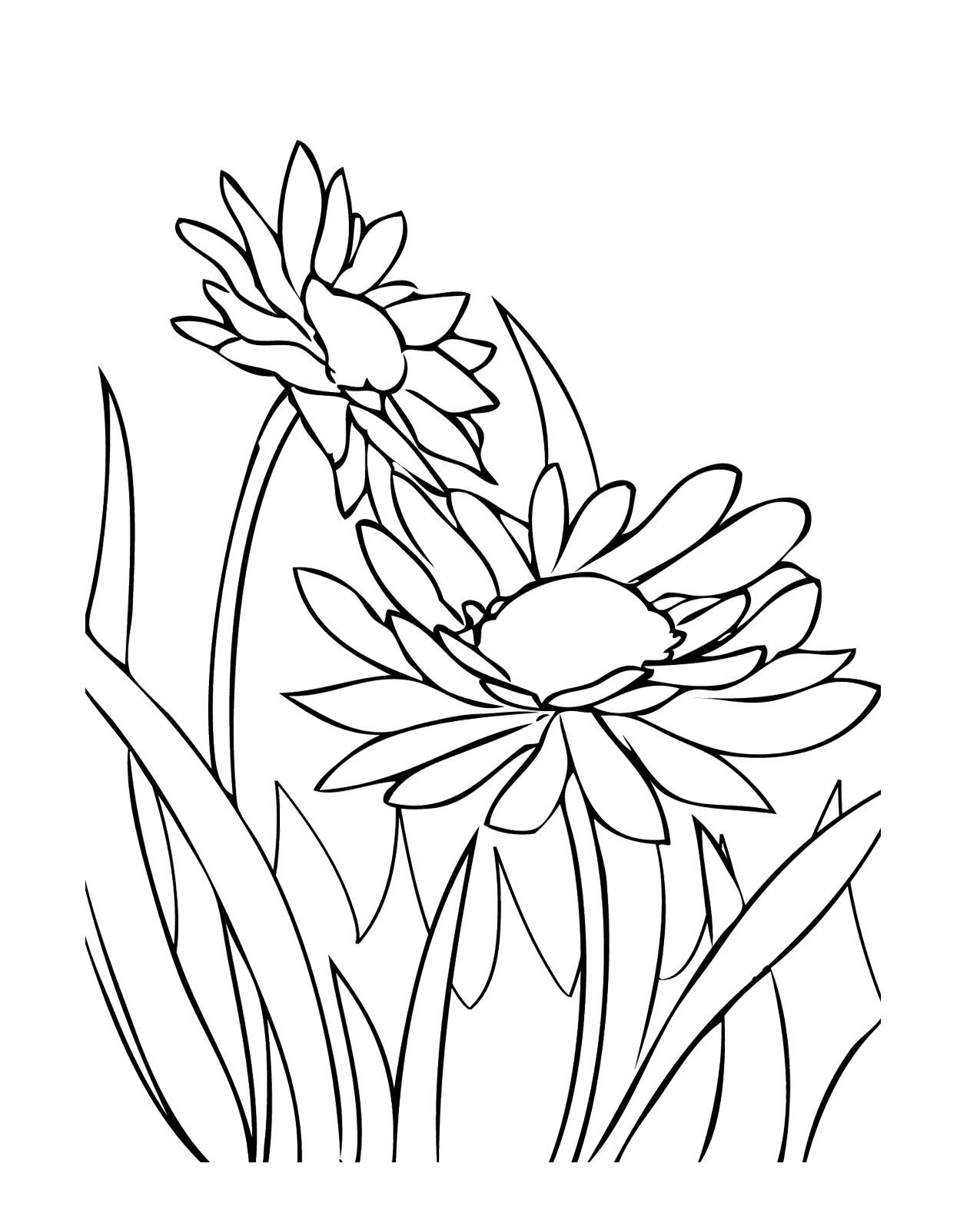 flower mosaic coloring pages mosaic drawing patterns free download on clipartmag coloring flower mosaic pages