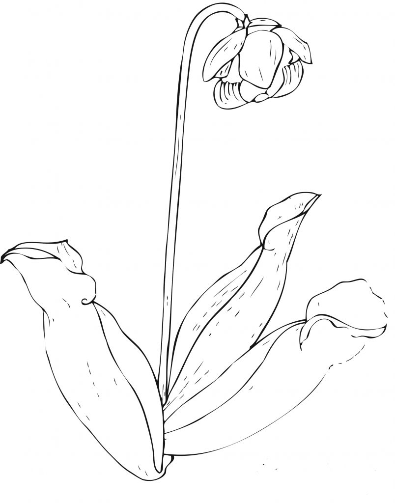 flower pictures coloring pages flower coloring pages part 2 flower pictures coloring pages