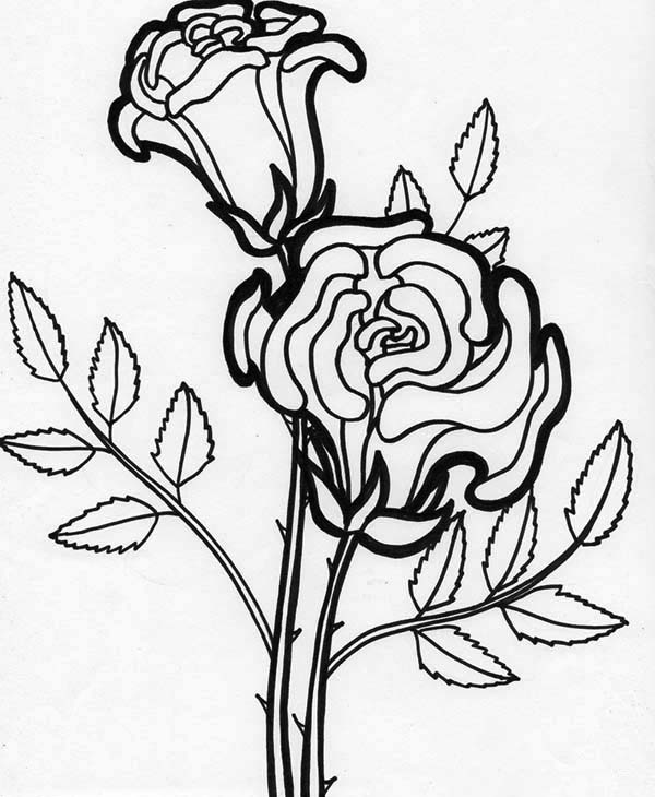 flower pictures coloring pages rose flower blooming coloring page kids play color pictures coloring flower pages