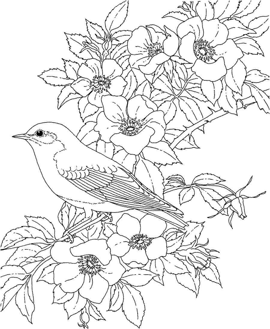 flowers color pages flower coloring pages for adults flowers pages color