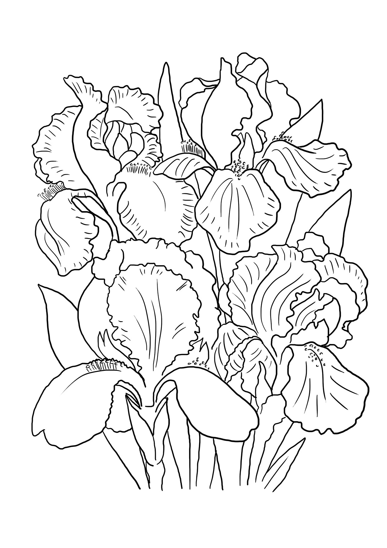 flowers color pages free printable flowers pdf coloring pages 10 color pages flowers