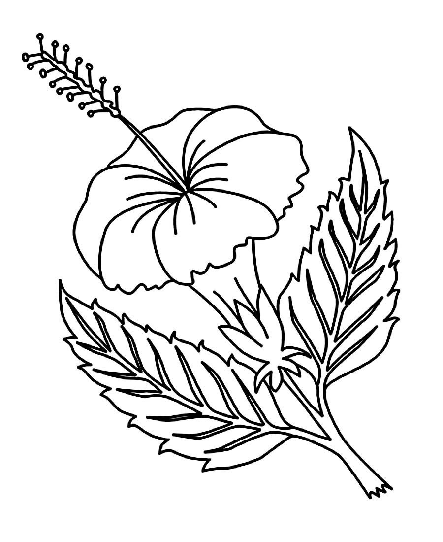 flowers color pages free printable hibiscus coloring pages for kids flowers color pages