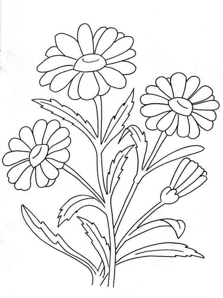 flowers color pages lily flower coloring pages at getcoloringscom free color pages flowers