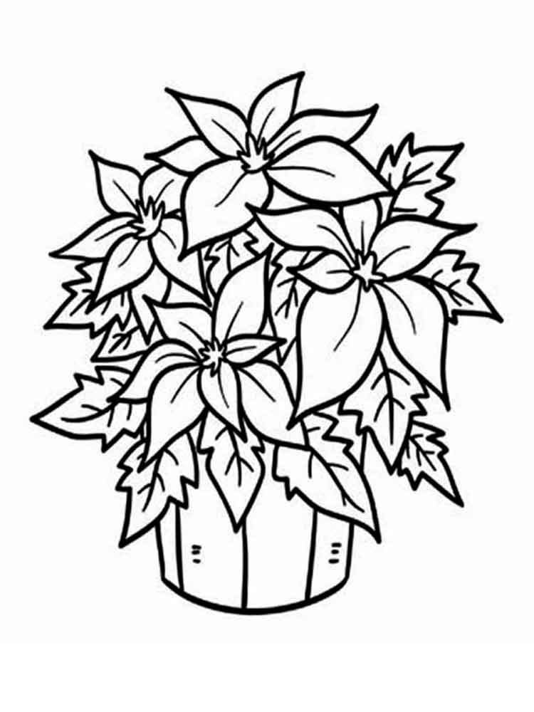flowers color pages poinsettia flower coloring pages download and print pages color flowers