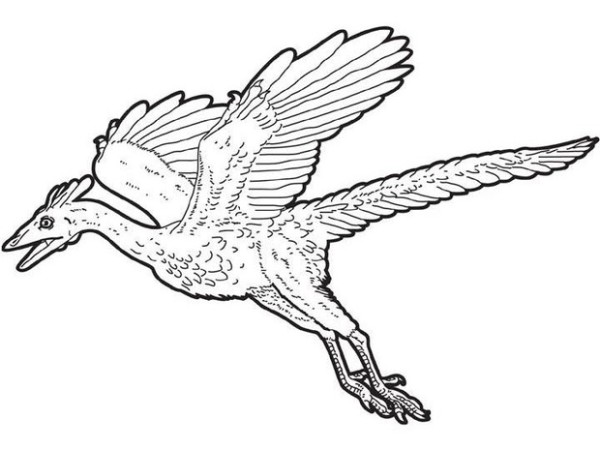 flying dinosaur coloring pages pteranodon flying coloring page free printable coloring dinosaur coloring pages flying