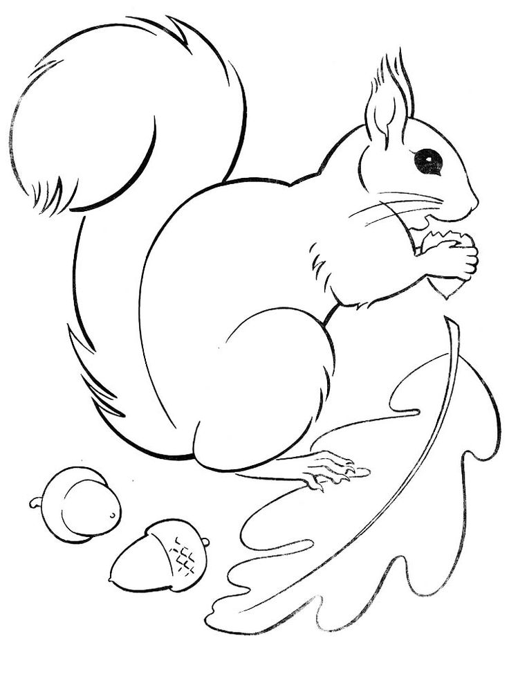 flying squirrel coloring page alaskan wildlife coloring book dover publications squirrel coloring flying page