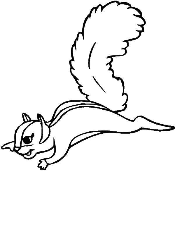 flying squirrel coloring page flying squirrel coloring page adairs animals adair39s squirrel flying page coloring