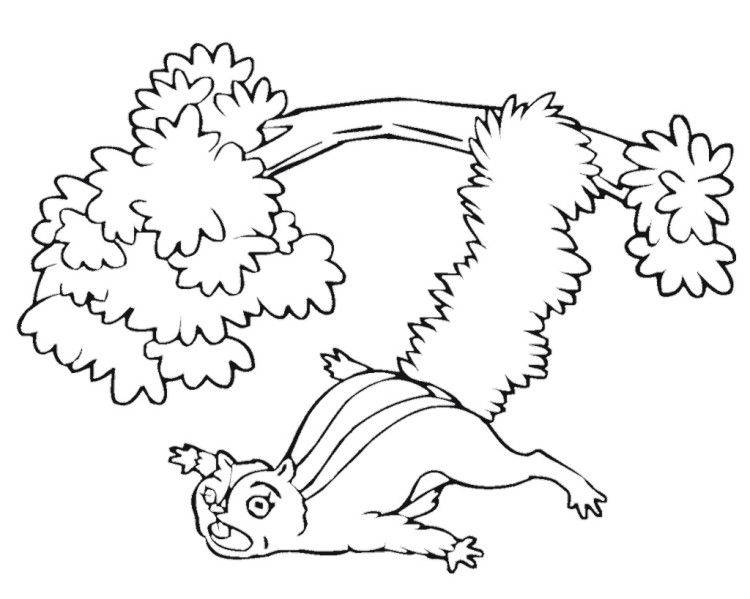 flying squirrel coloring page flying squirrel coloring page clipartsco flying page squirrel coloring