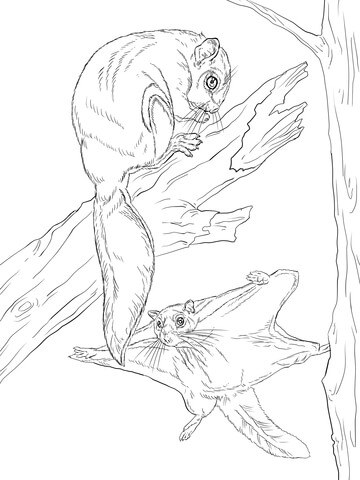 flying squirrel coloring page flying squirrel coloring page flying squirrel coloring coloring squirrel page flying