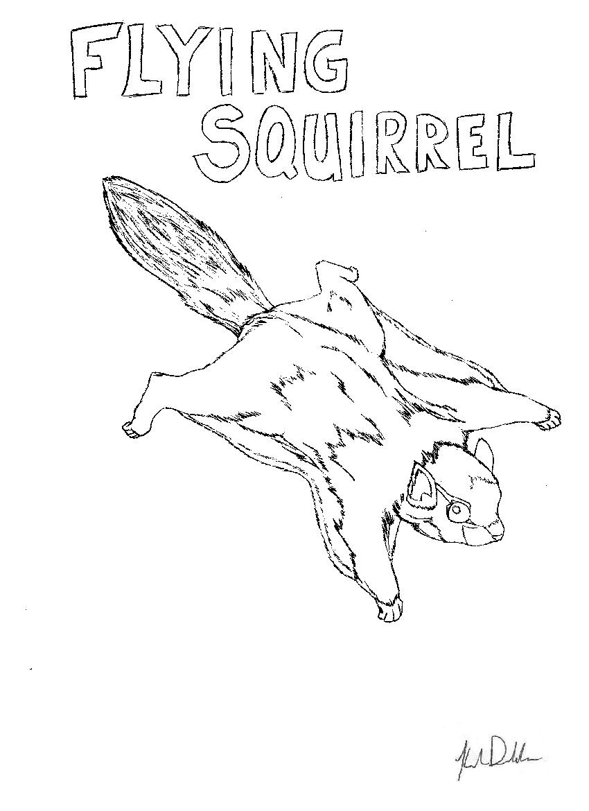 flying squirrel coloring page flying squirrel coloring page supercoloringcom coloring squirrel flying page