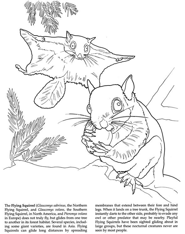 flying squirrel coloring page flying squirrel coloring pages download and print for free coloring squirrel flying page