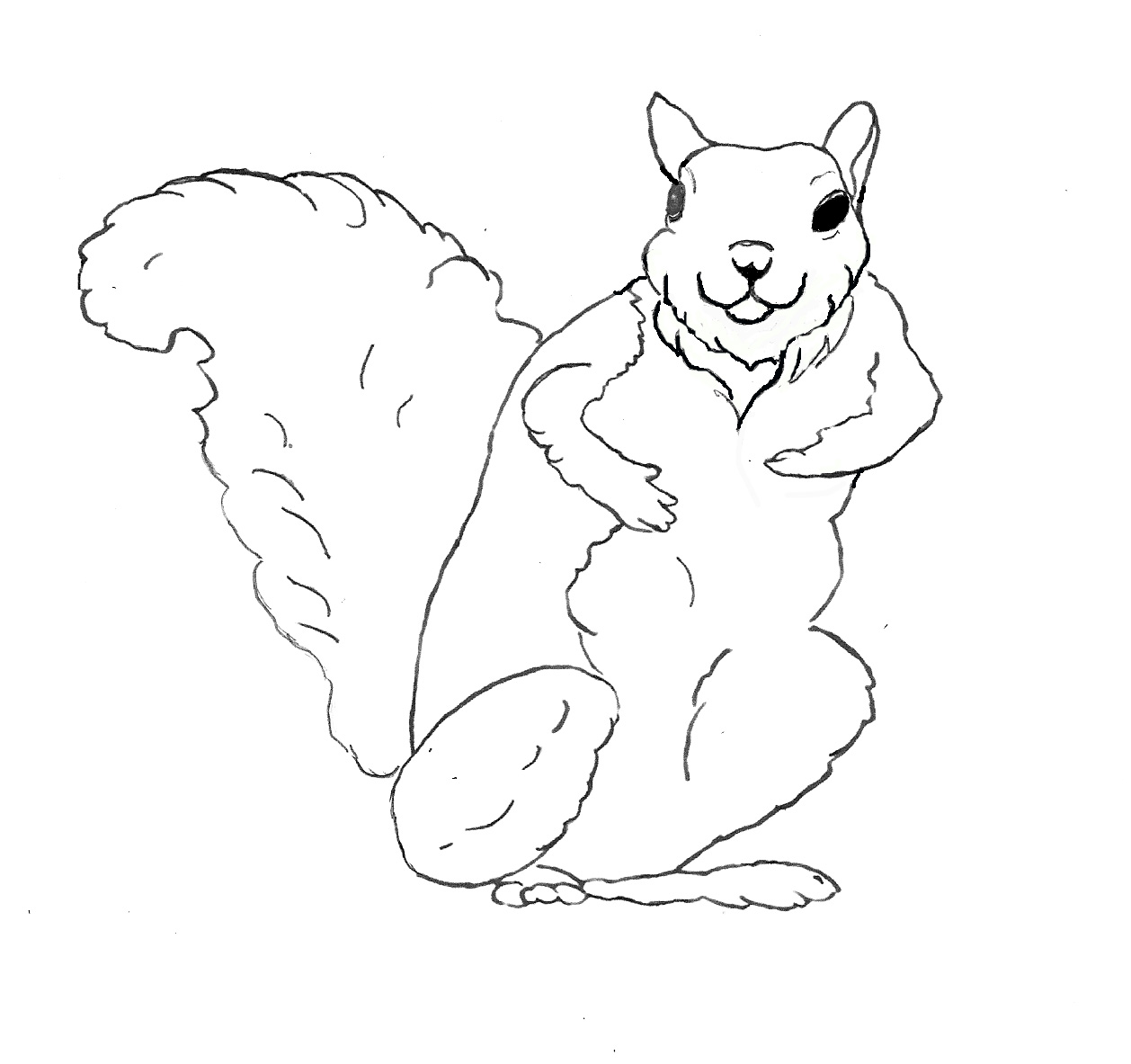 flying squirrel coloring page flying squirrel from the tree coloring pages tree coloring squirrel flying page