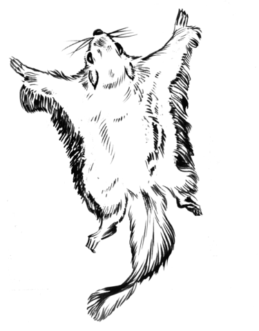 flying squirrel coloring page full size flying squirrel colouring pages clip art library squirrel flying coloring page