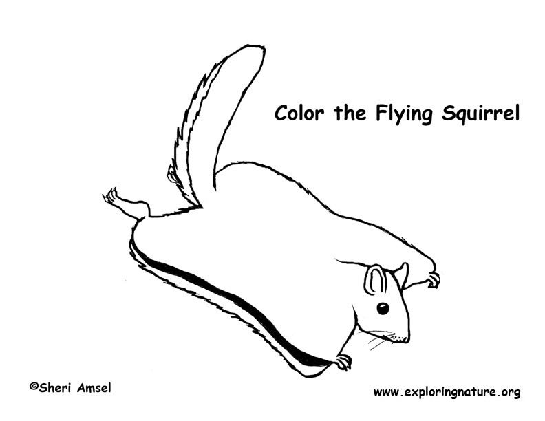 flying squirrel coloring page northern flying squirrel coloring page supercoloringcom squirrel page coloring flying