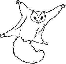 flying squirrel coloring page wildlife flying squirrel coloring page coloring flying squirrel page