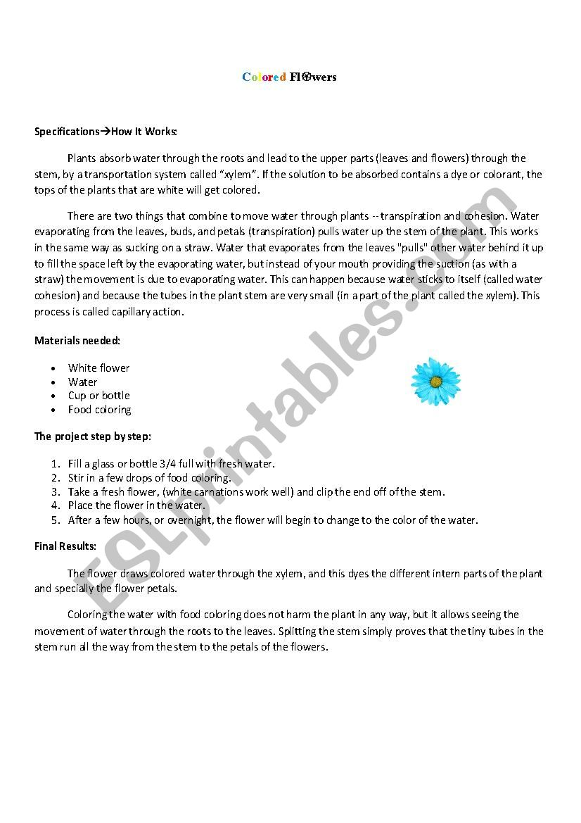 food coloring flower experiment colorful carnation experiment worksheets teaching coloring experiment food flower