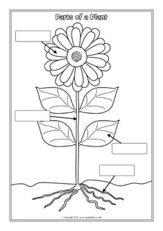 food coloring flower experiment food coloring flower experiment worksheet anany2 experiment flower food coloring