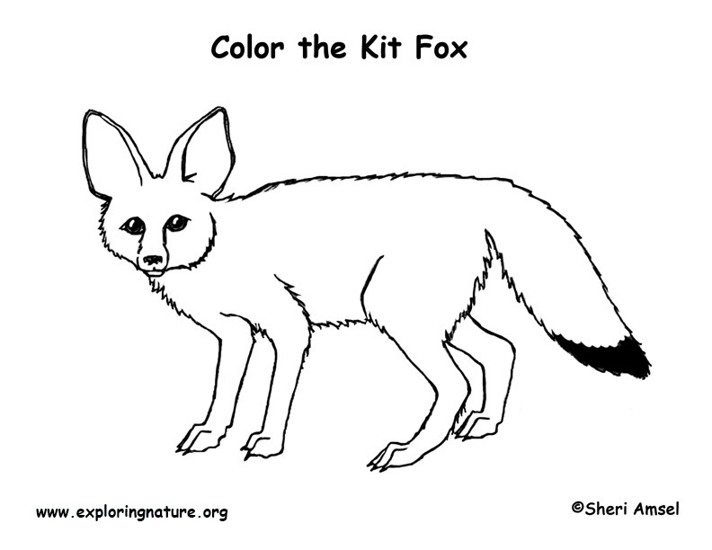 fox coloring games free printable fox coloring pages for kids coloring games fox