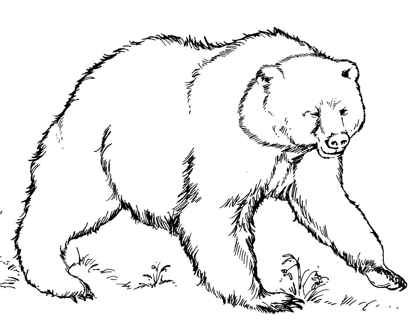 free coloring pages bears free printable bear coloring pages for kids free coloring pages bears