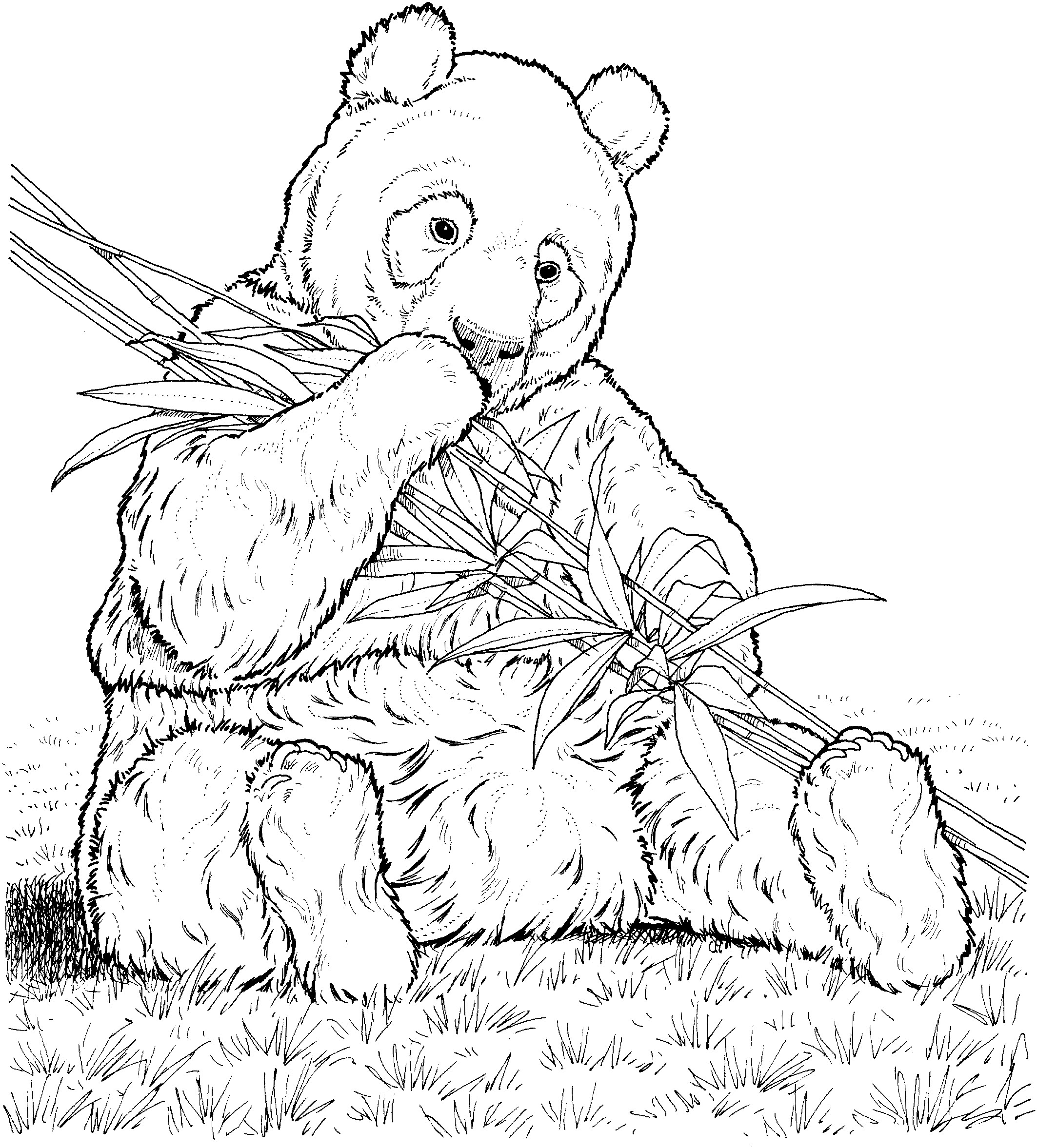 free coloring pages bears free printable polar bear coloring pages for kids free bears coloring pages