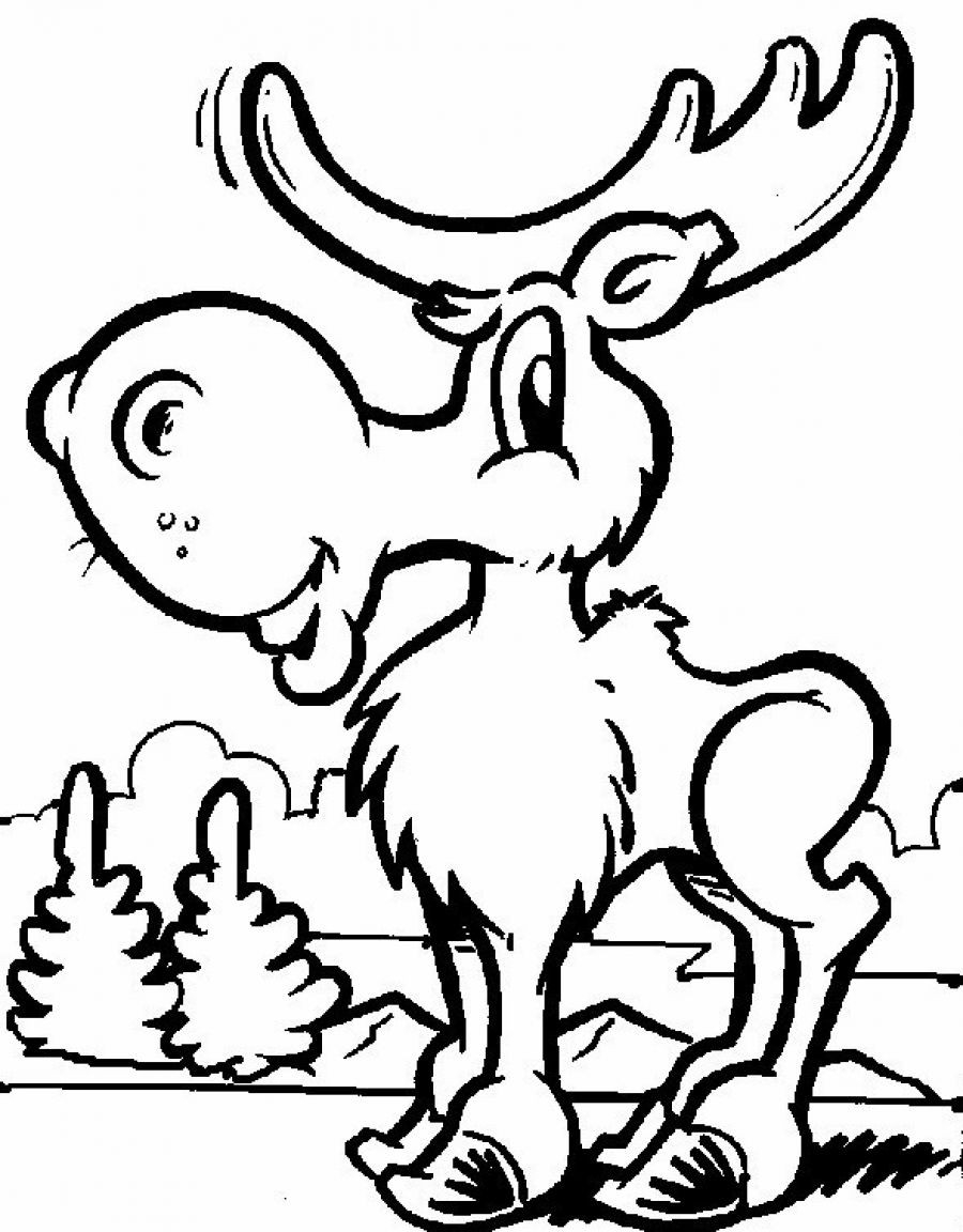 free printable coloring pages animals cat coloring pages for adults best coloring pages for kids coloring printable animals pages free