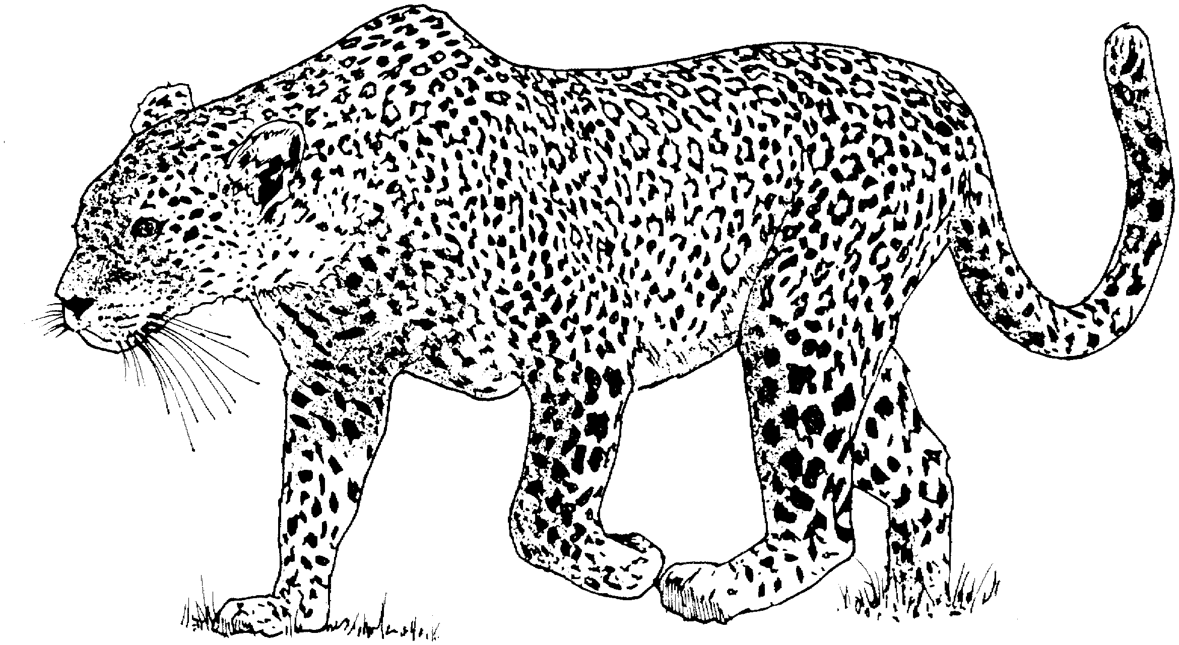 free printable coloring pages animals crayola free coloring pages animals bubakidscom pages free printable coloring animals