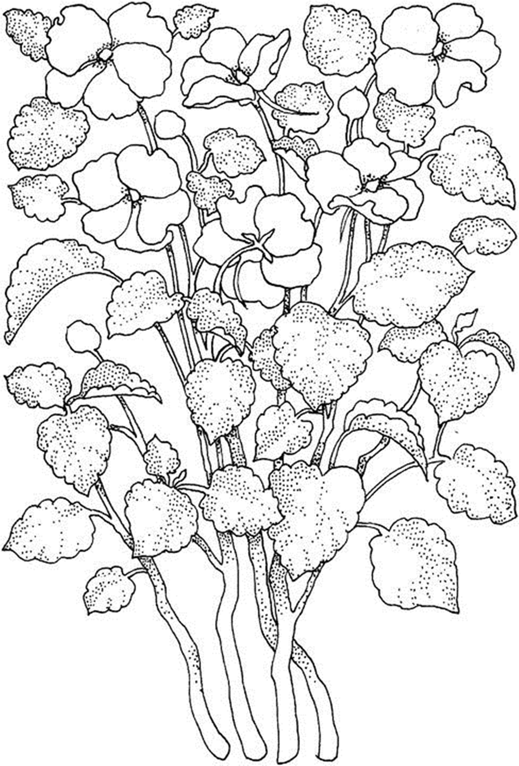 free printable coloring pages of flowers free printable flower coloring pages for kids best flowers pages free printable of coloring