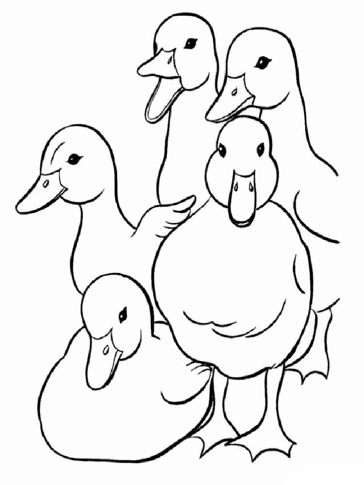 free printable duck coloring pages collection of duck coloring pages for kids duck pages free printable coloring