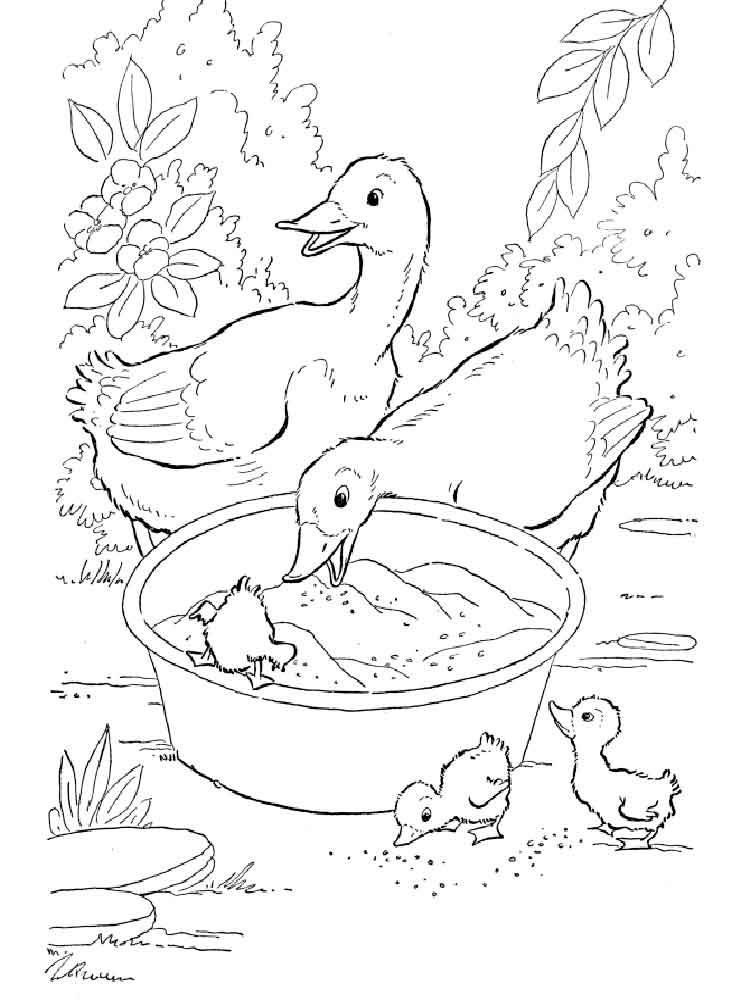 free printable duck coloring pages duck coloring pages printable duck free coloring pages