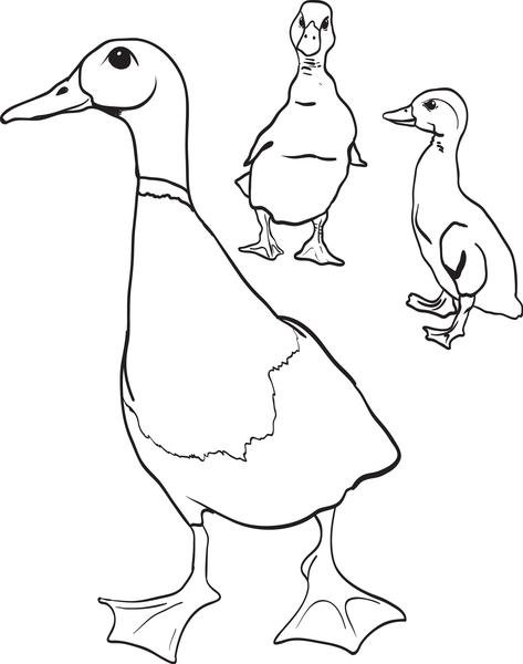free printable duck coloring pages free printable mother duck with little ducklings coloring pages free printable duck coloring