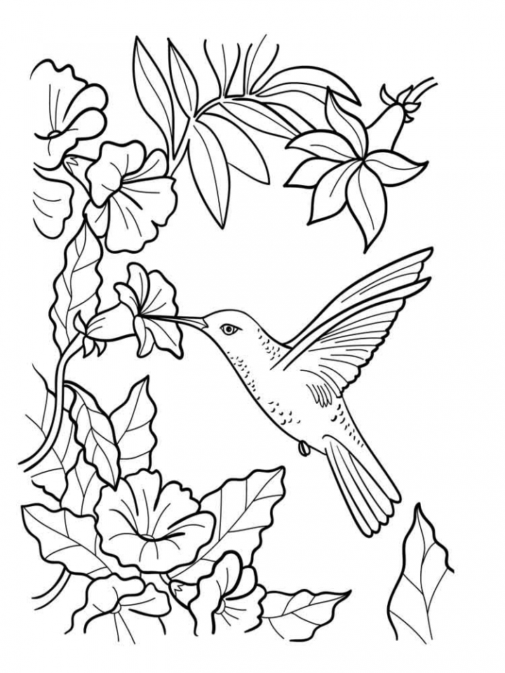 free printable hummingbird coloring pages free printable hummingbird coloring pages at getdrawings coloring printable hummingbird pages free