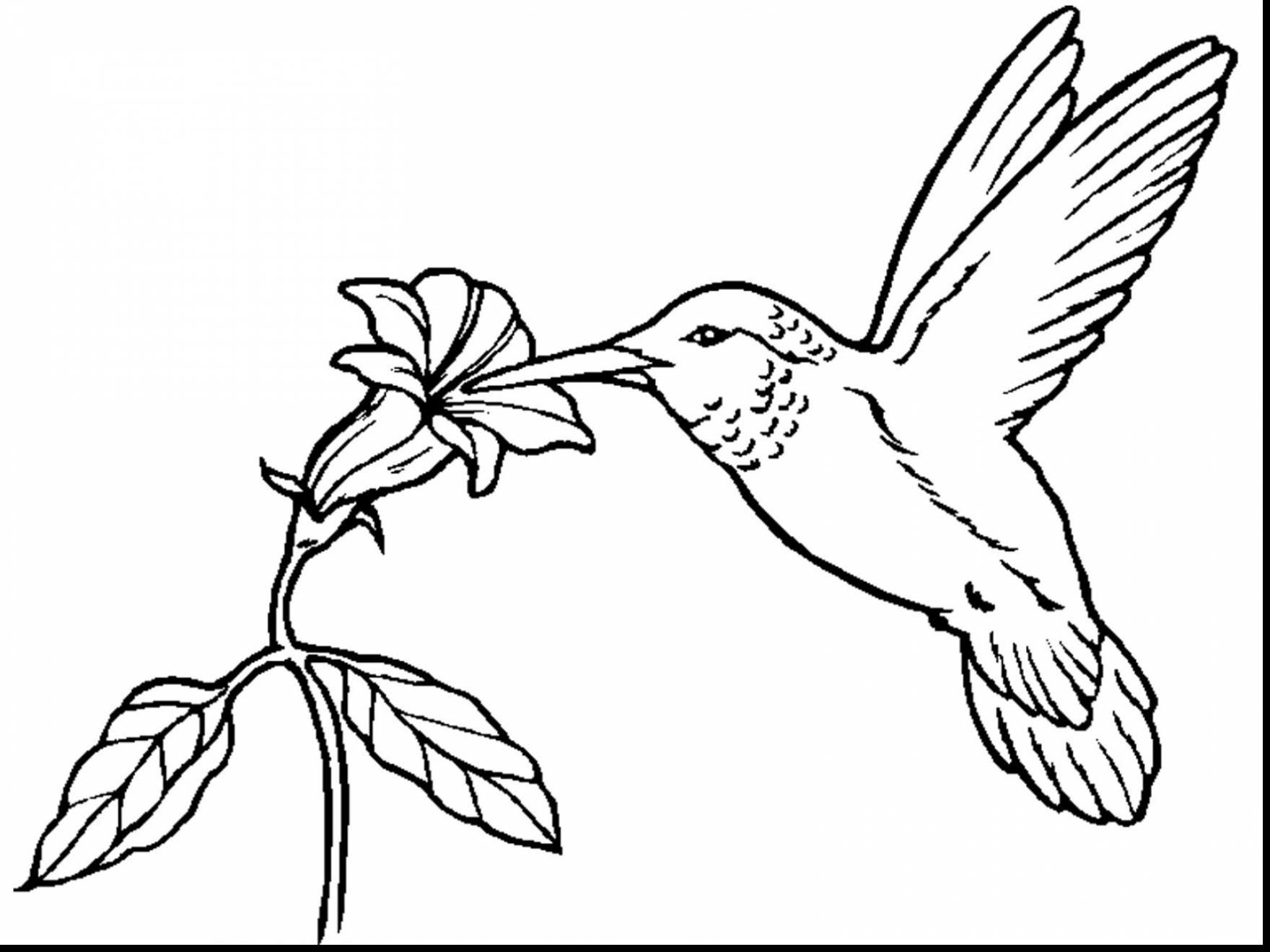 free printable hummingbird coloring pages free printable hummingbird coloring pages for kids free printable hummingbird pages coloring