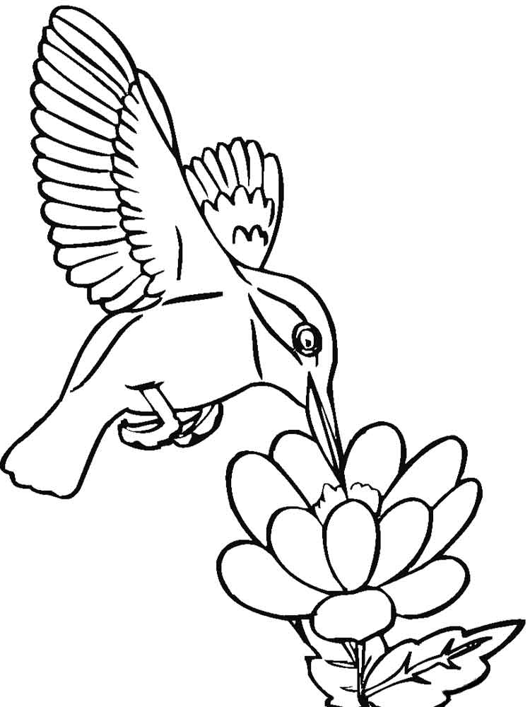 free printable hummingbird coloring pages free printable hummingbird coloring pages for kids hummingbird free printable coloring pages