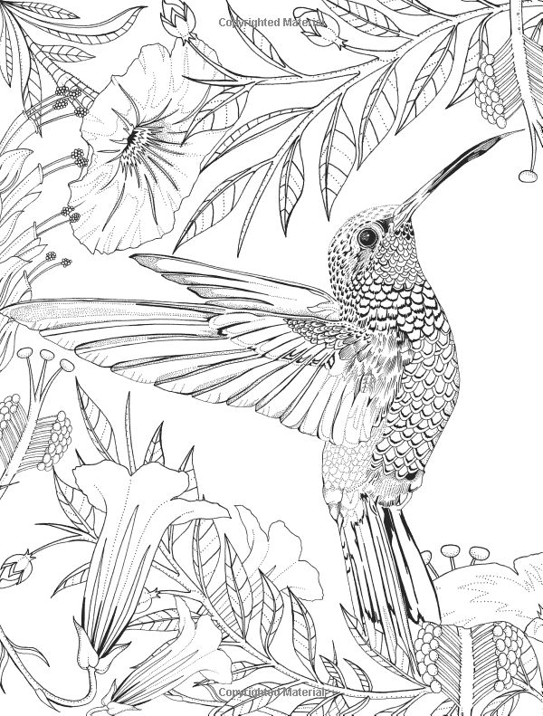 free printable hummingbird coloring pages get this free hummingbird coloring pages to print 00029 pages printable free hummingbird coloring