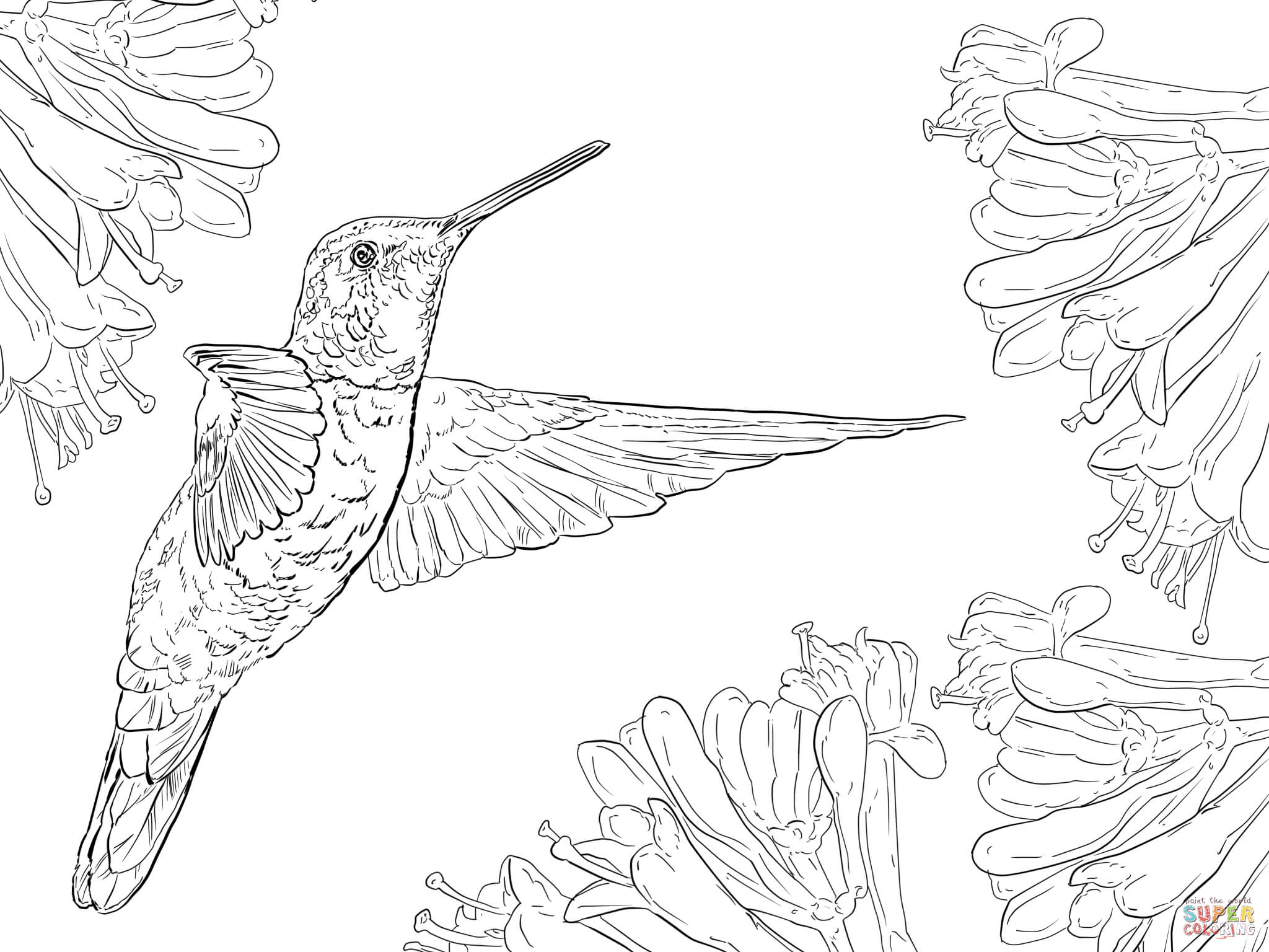 free printable hummingbird coloring pages hummingbird coloring pages to download and print for free hummingbird pages free coloring printable 1 1