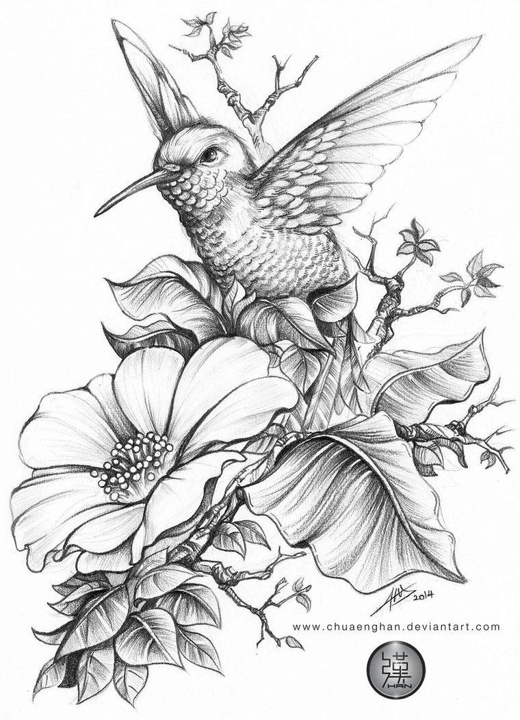 free printable hummingbird coloring pages hummingbird coloring pages to download and print for free hummingbird printable free pages coloring
