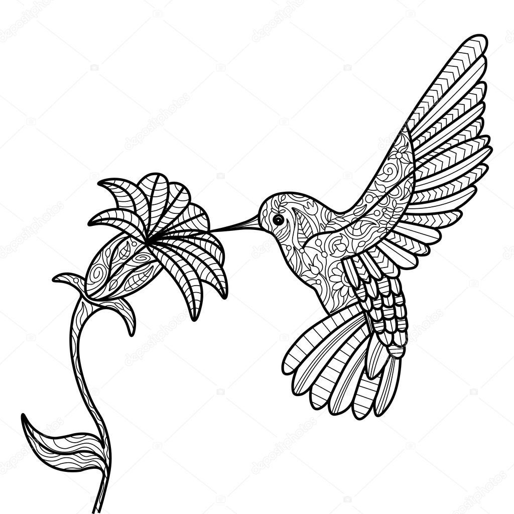 free printable hummingbird coloring pages hummingbird colouring page bird coloring pages free pages coloring printable hummingbird