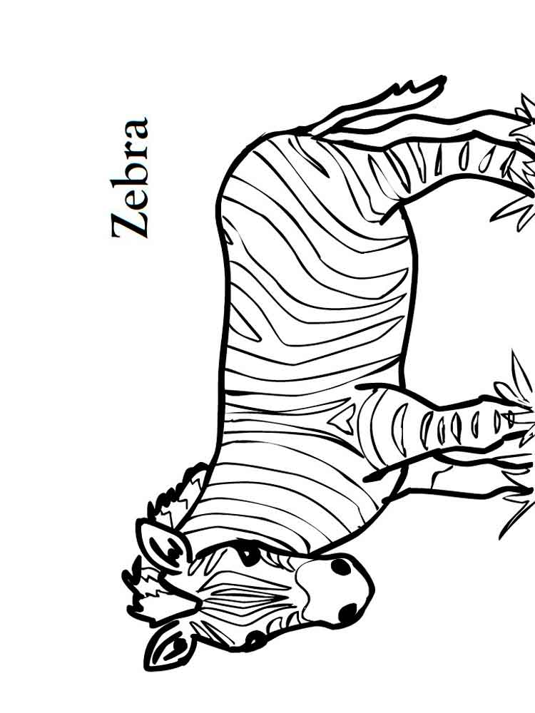 free zebra coloring pages to print free printable zebra coloring pages for kids coloring print pages free zebra to
