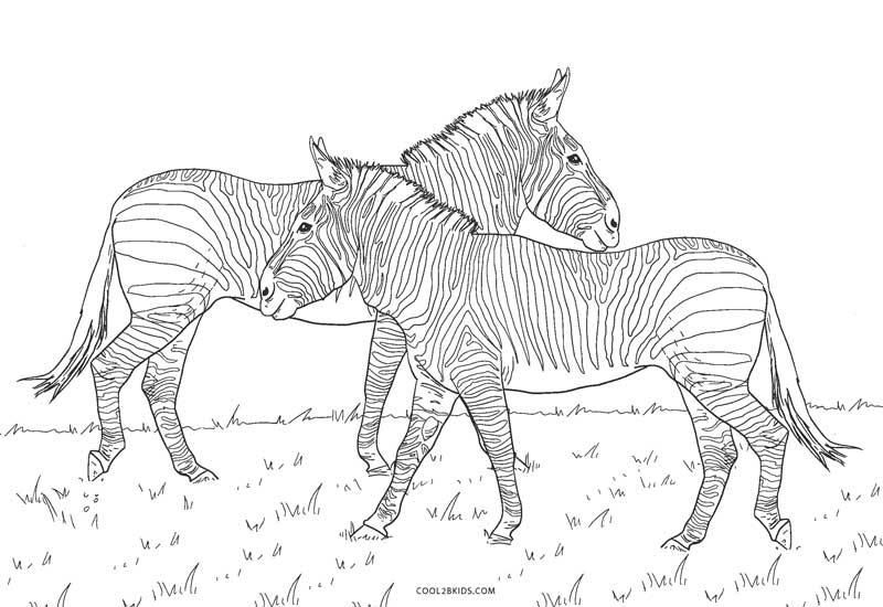 free zebra coloring pages to print free printable zebra coloring pages for kids free to print coloring pages zebra