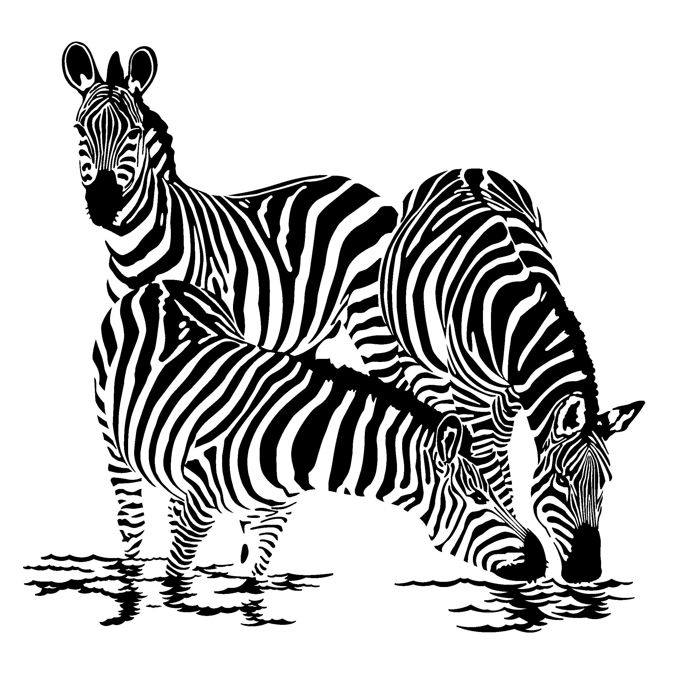 free zebra coloring pages to print free printable zebra coloring pages for kids print zebra to coloring pages free