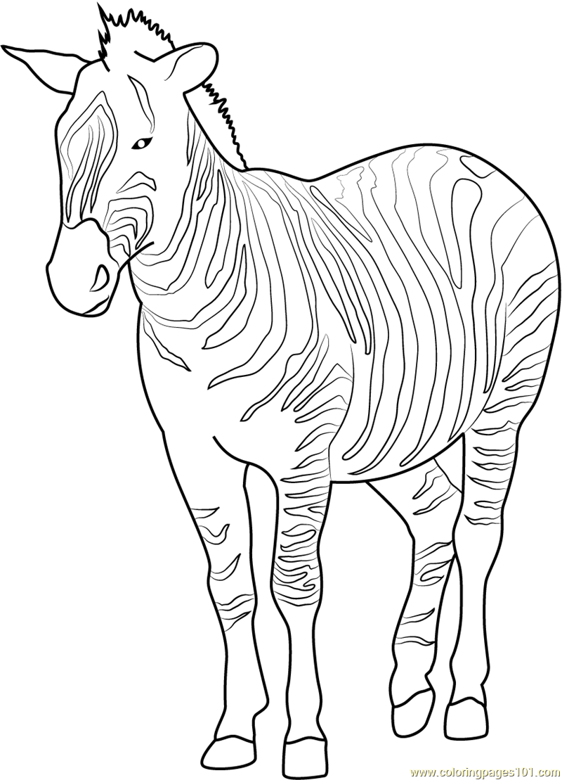 free zebra coloring pages to print zebra coloring pages download and print zebra coloring pages pages free to print zebra coloring