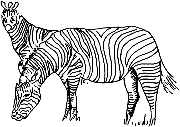 free zebra coloring pages to print zebra coloring pages free printable kids coloring pages coloring zebra print free pages to