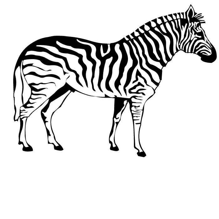 free zebra coloring pages to print zebra coloring pages to download and print for free print zebra pages to free coloring