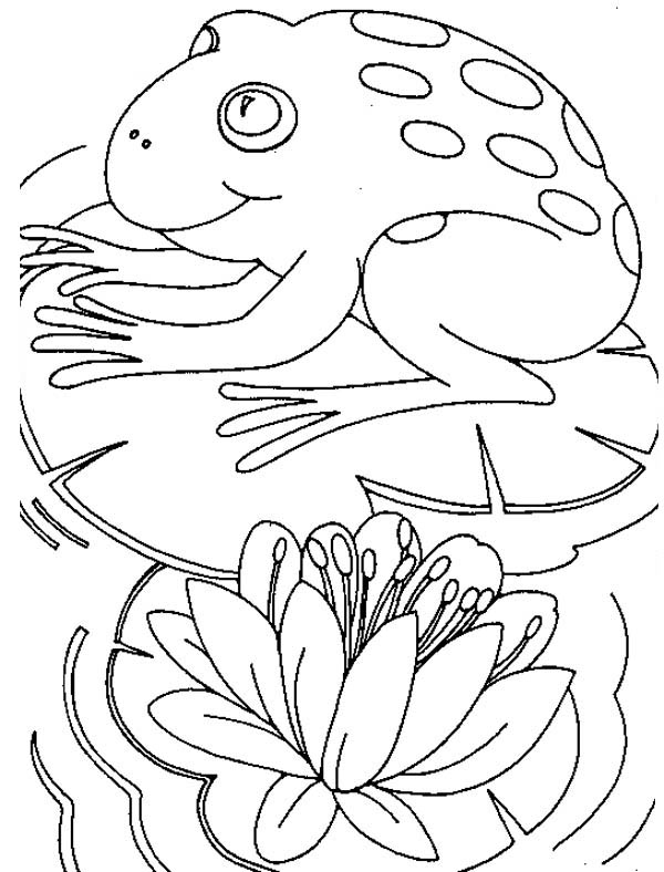 frog on lily pad coloring page cool2bkids kids fun zone coloring frog page pad lily on