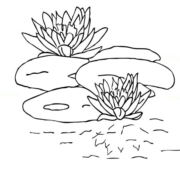frog on lily pad coloring page frog in rain under lily pad coloring page pad lily page coloring on frog