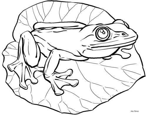 frog on lily pad coloring page frog on lily pad coloring page clipart best page pad frog lily on coloring