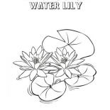 frog on lily pad coloring page hungry frog hunt for insect on lily pad coloring page page coloring on pad lily frog