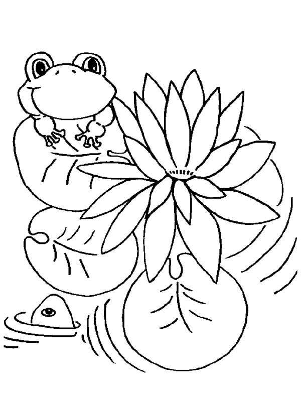 frog on lily pad coloring page lily pad and frog coloring page color luna coloring lily frog on page pad